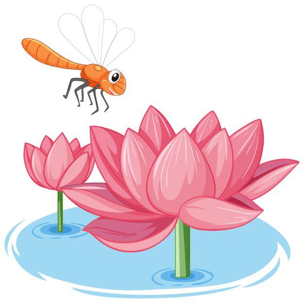 Pink Lotus clipart 5
