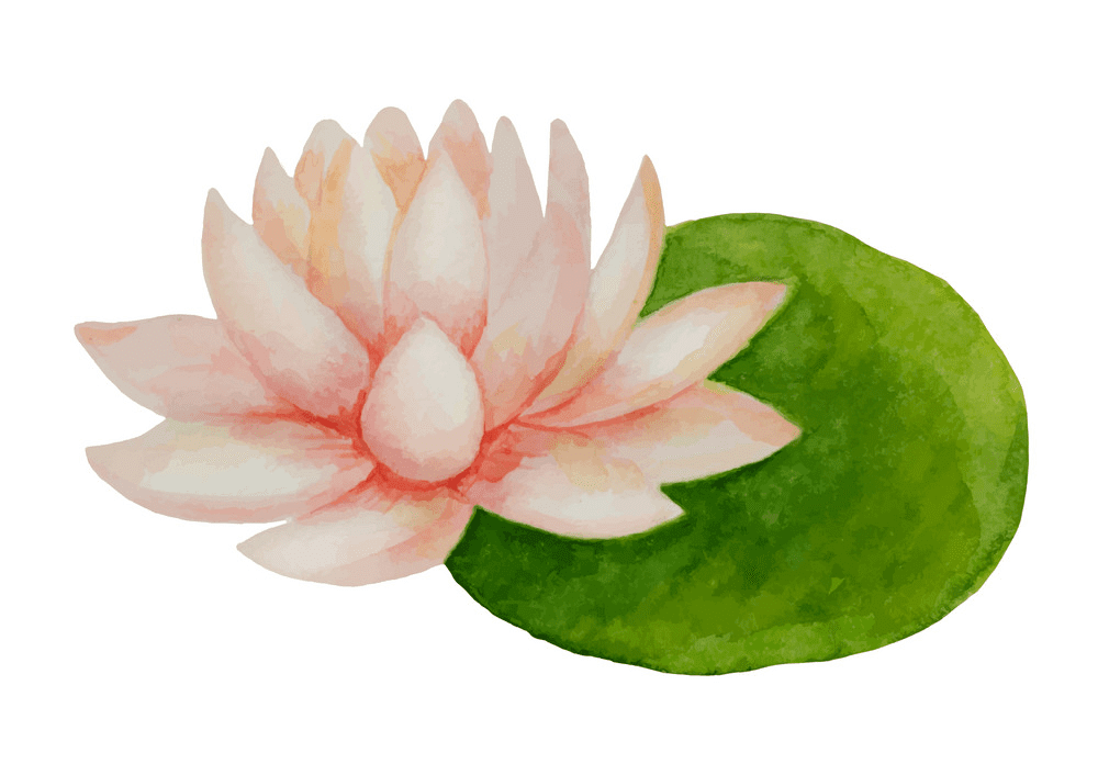 Pink Lotus clipart for free