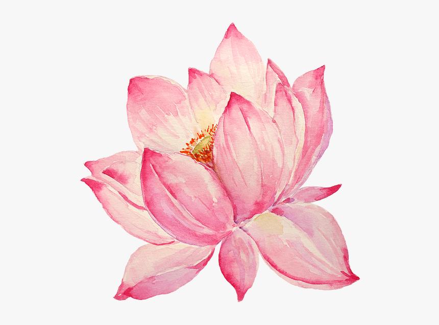 Pink Lotus clipart