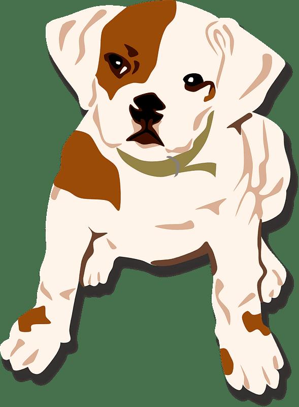 Png Bulldog clipart transparent background