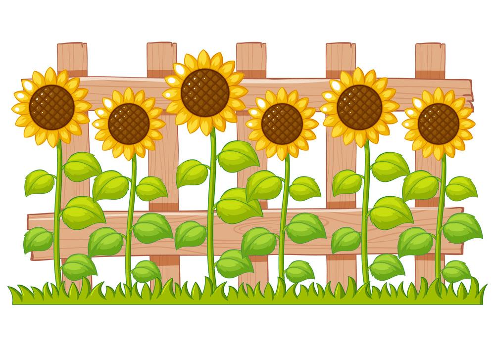 Sunflower Garden clipart png