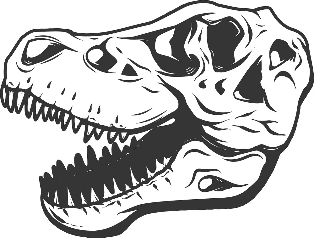 T-Rex Skull clipart free