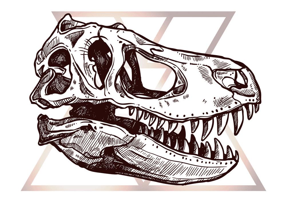 T-Rex Skull clipart image