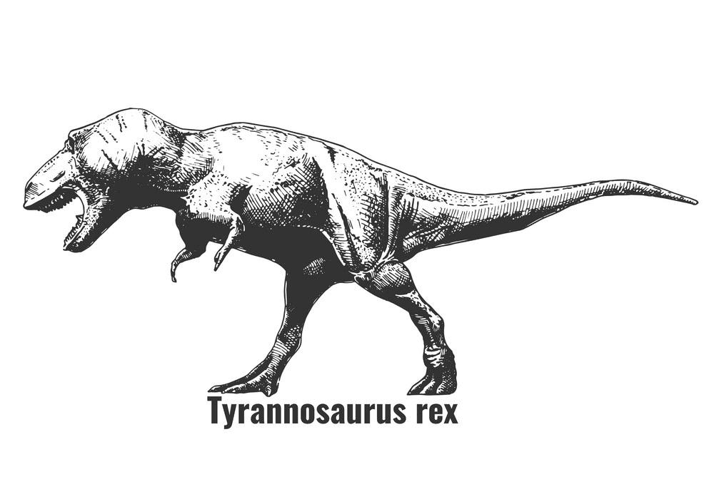 T-Rex clipart 7
