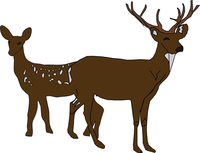 Two Deers clipart transparent background