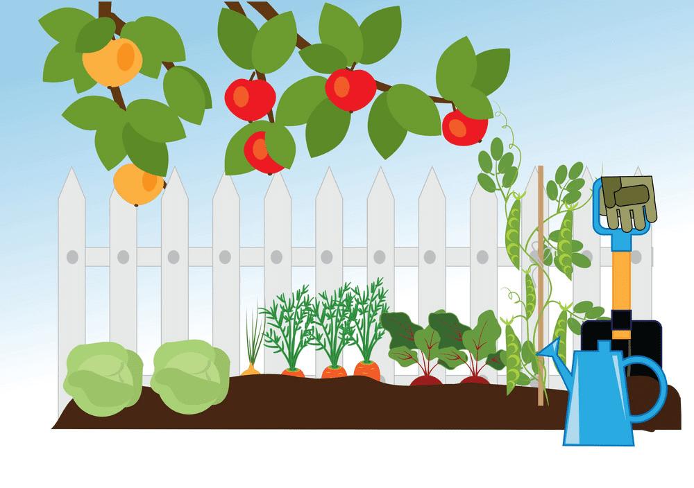 Vegetable Garden clipart 1