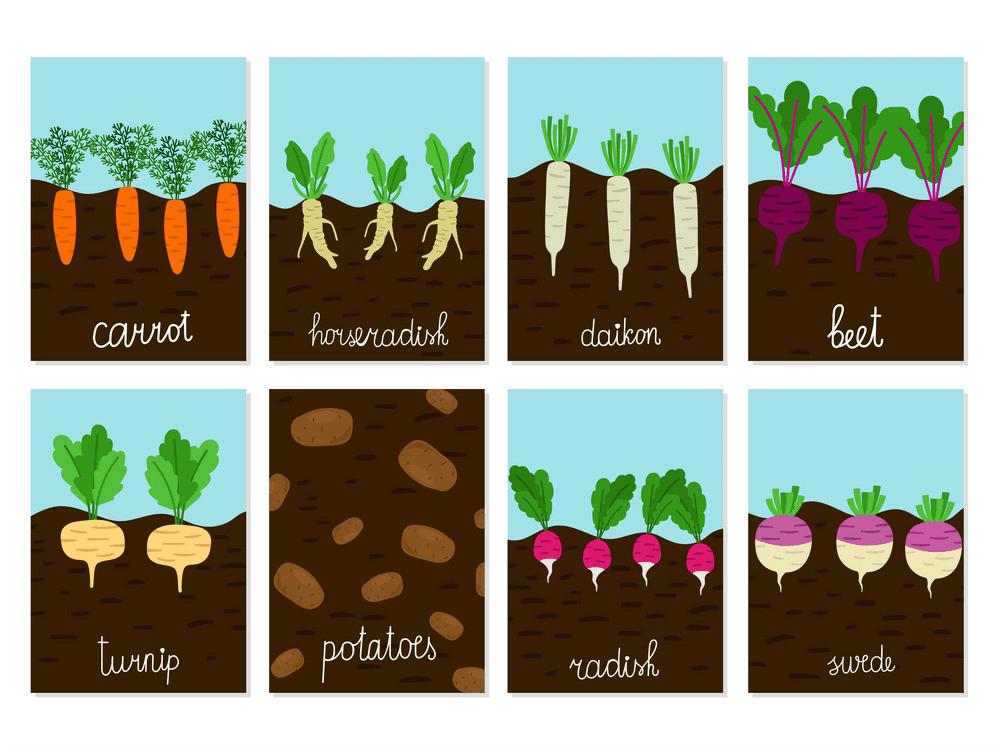 Vegetable Garden clipart 5