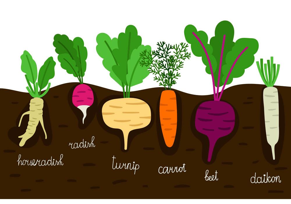 Vegetable Garden clipart for free