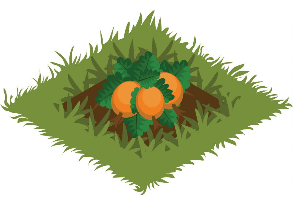 Vegetable Garden clipart png image