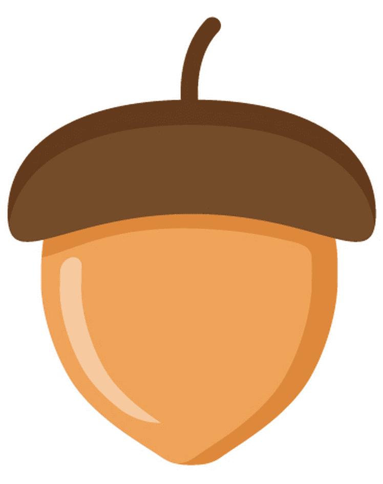 Acorn clipart 10