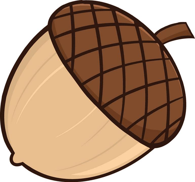Acorn clipart 4