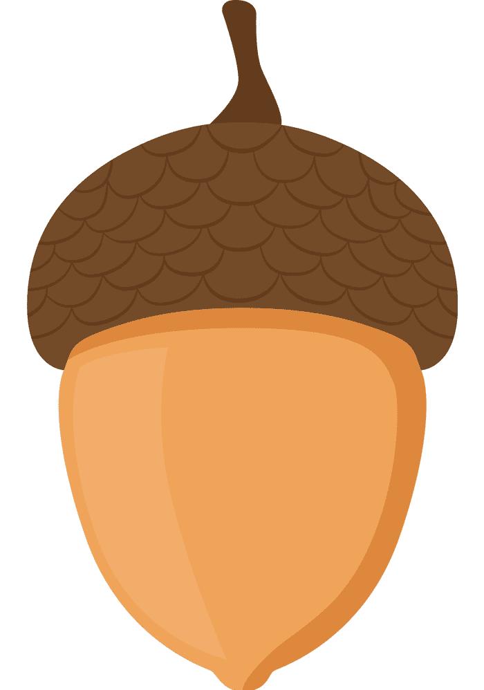 Acorn clipart 9