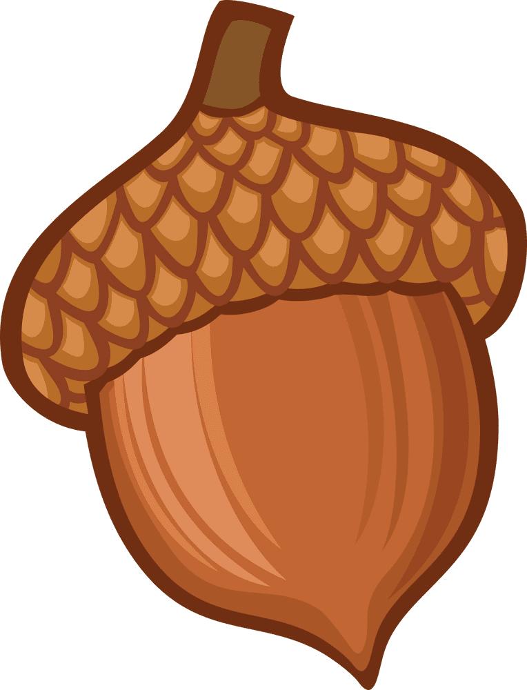 Acorn clipart png