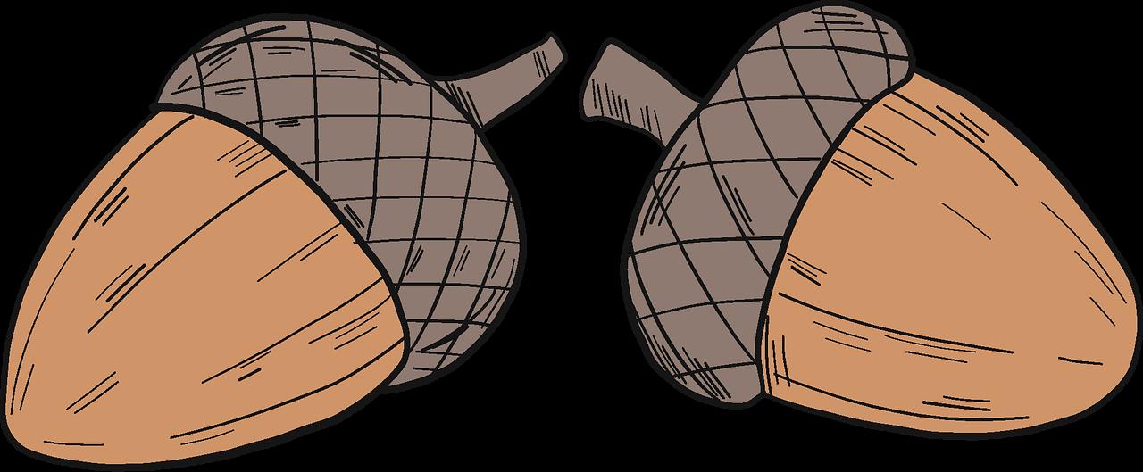 Acorn clipart transparent 2