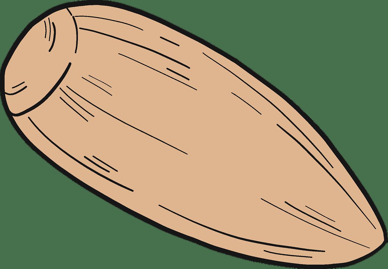 Acorn clipart transparent 5