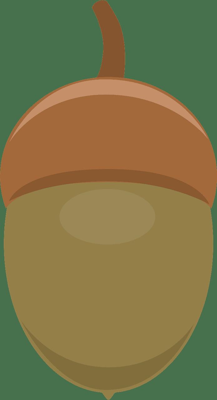 Acorn clipart transparent background 5