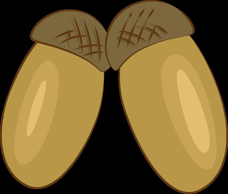 Acorn clipart transparent png