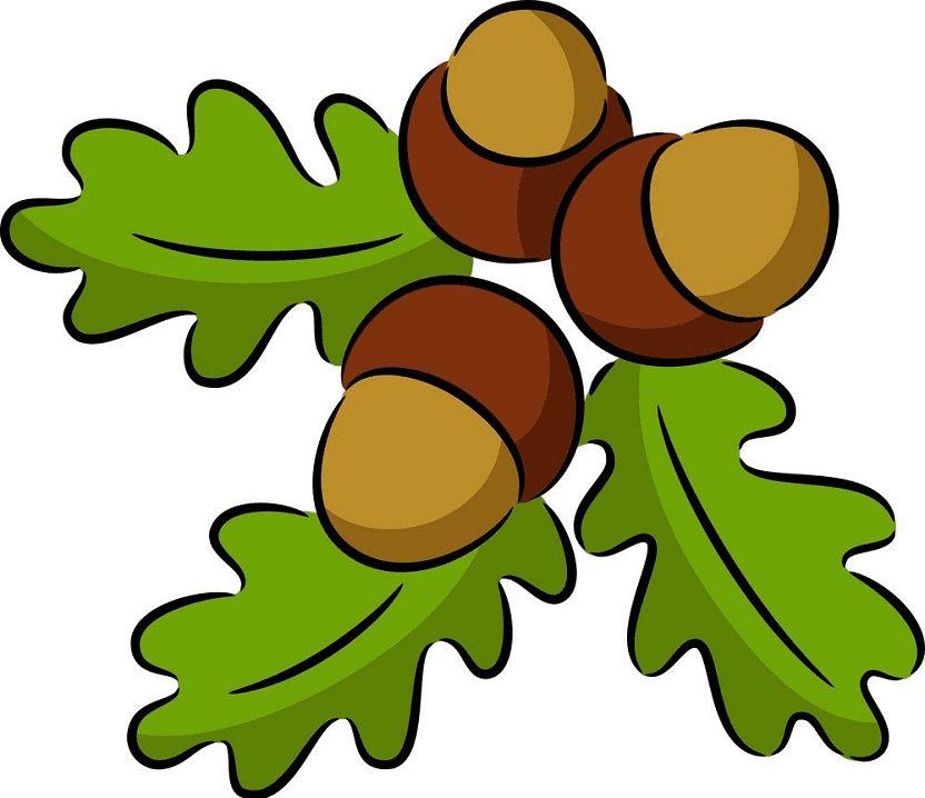 Acorns clipart for free