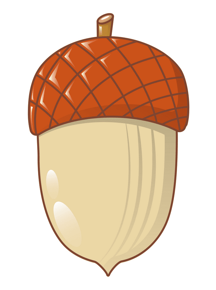 Clipart Acorn for free