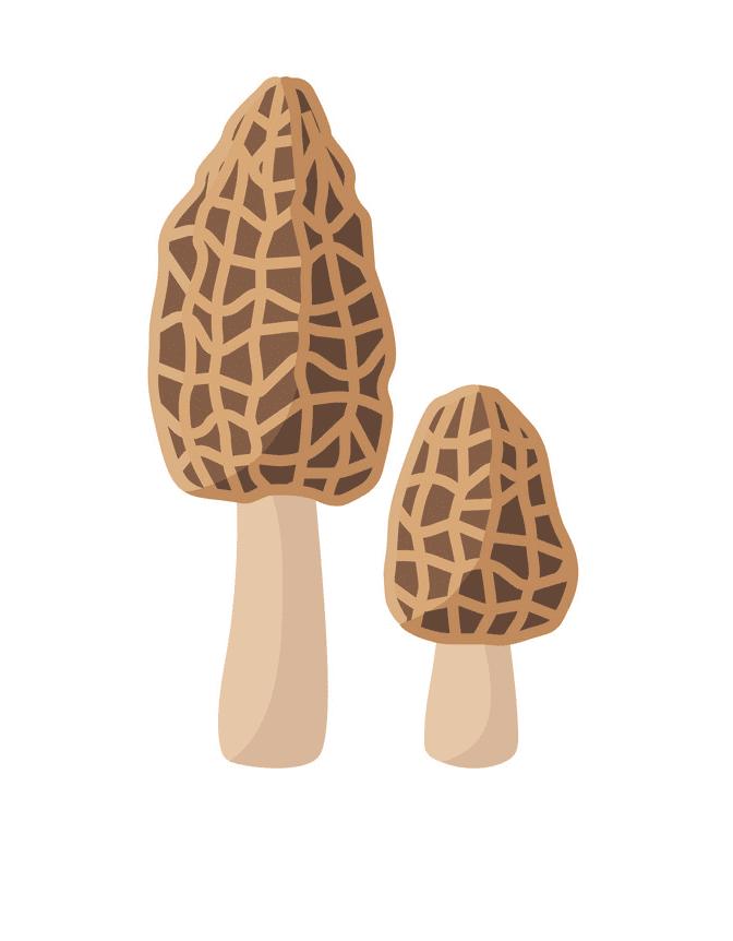 Morel Mushroom clipart free