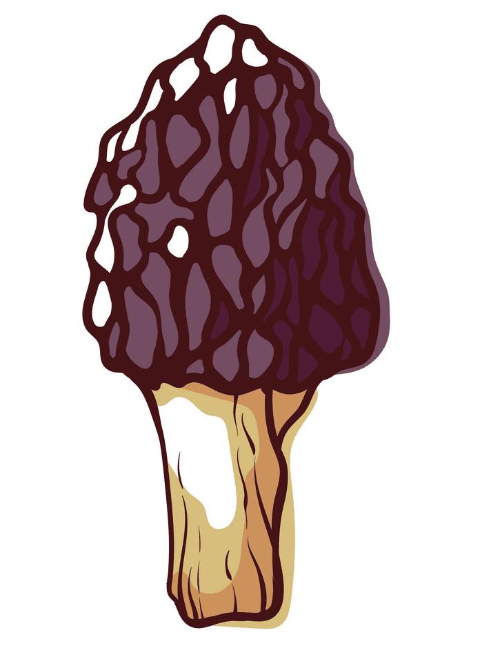 Morel Mushroom clipart image