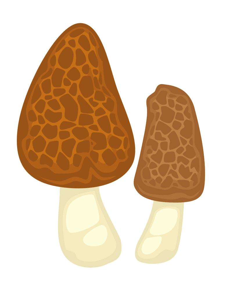 Morel Mushroom clipart images