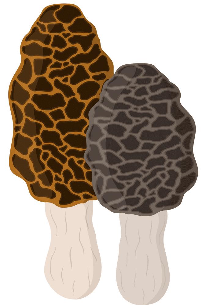 Morel Mushroom clipart png free