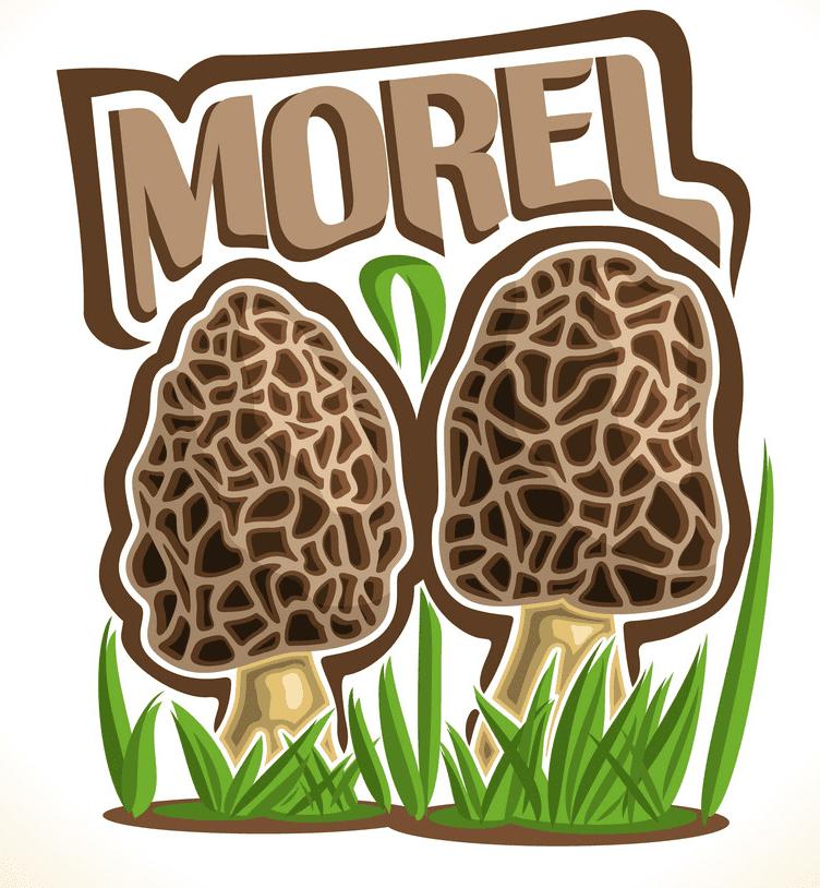 Morel Mushroom clipart png