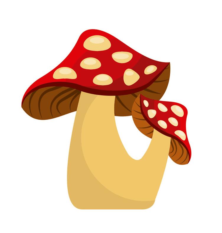 Mushroom clipart 3