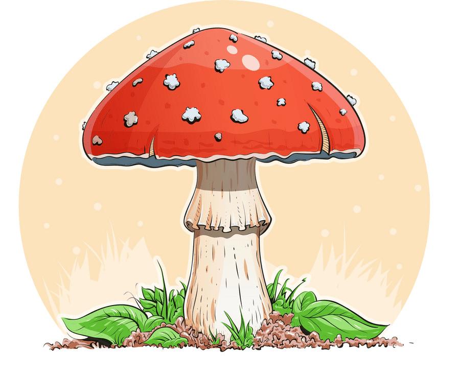 Mushroom clipart 5