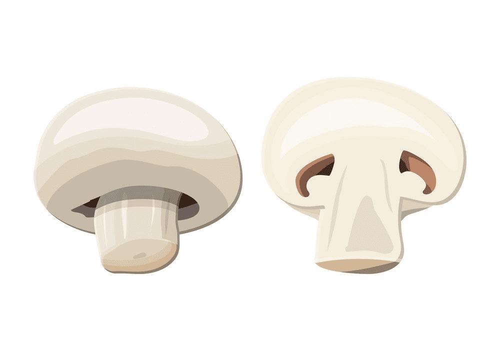 Mushroom clipart download