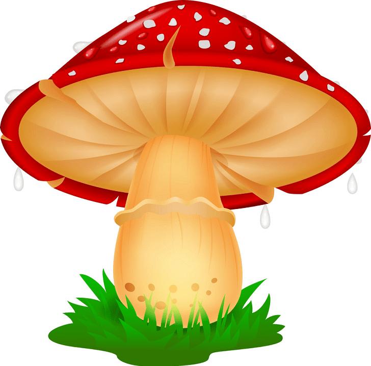 Mushroom clipart images