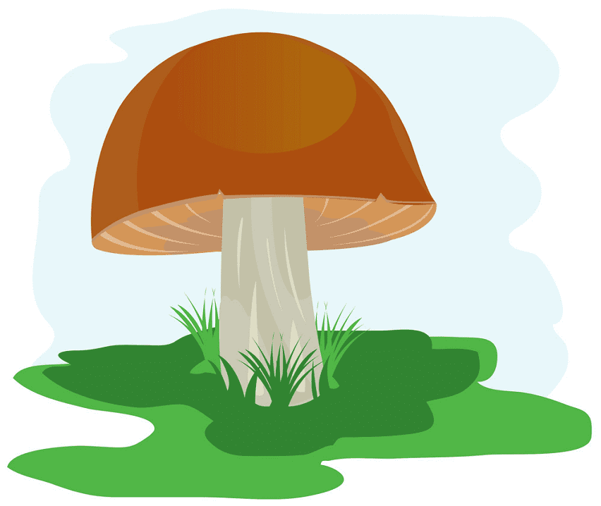 Mushroom clipart png images