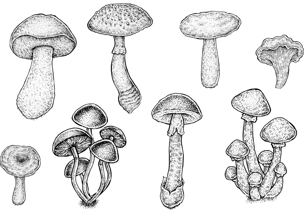 Mushrooms Clipart Black and White