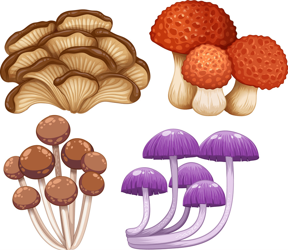 Mushrooms clipart free download