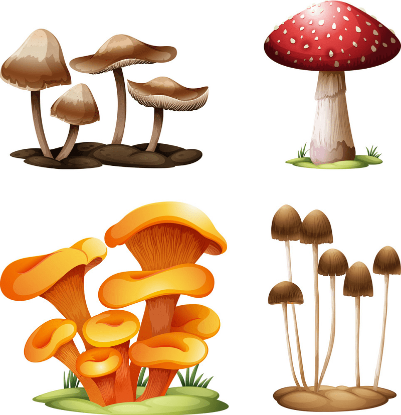 Mushrooms clipart png images