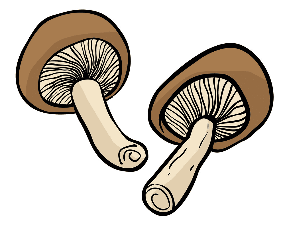 Mushrooms clipart png