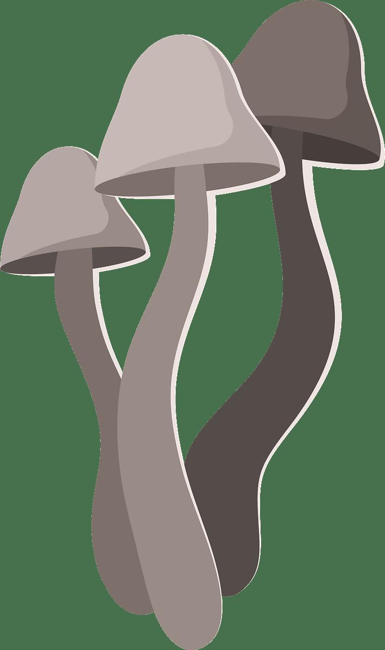 Mushrooms clipart transparent 4