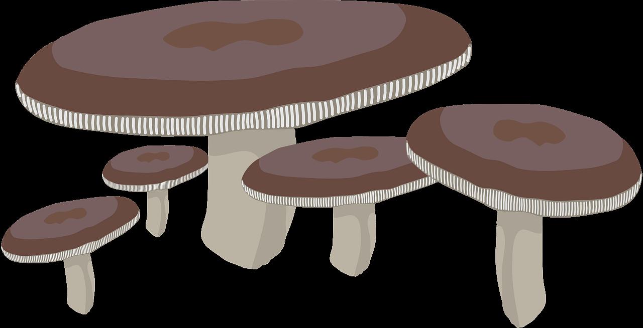 Mushrooms clipart transparent