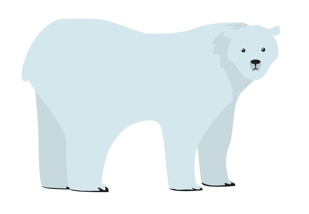 Polar Bear clipart 4