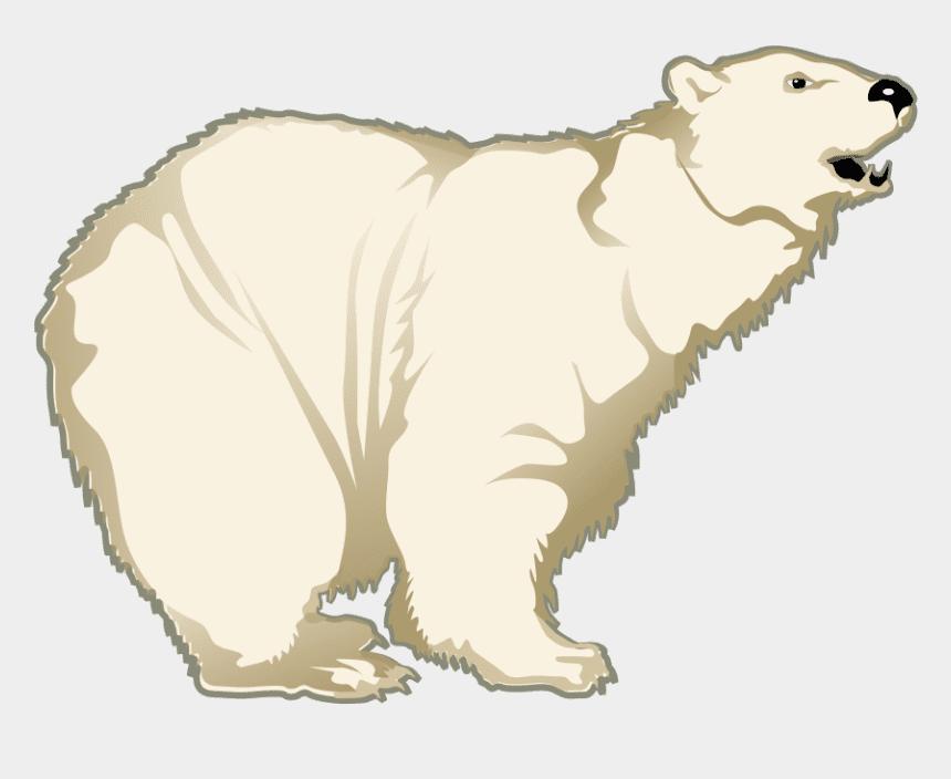 Polar Bear clipart 6