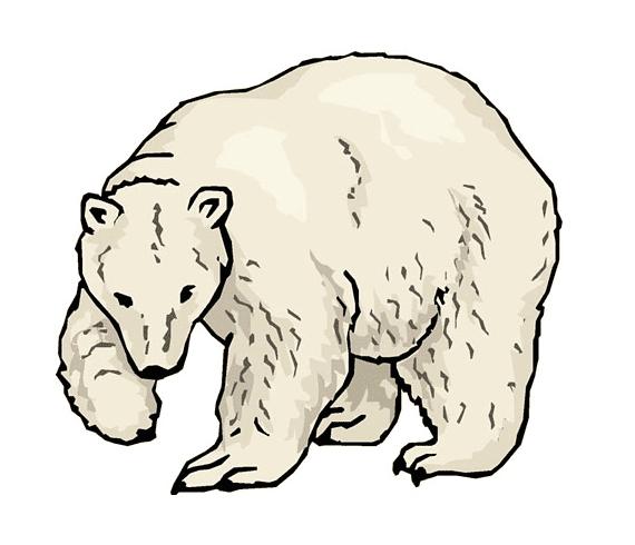 Polar Bear clipart 9