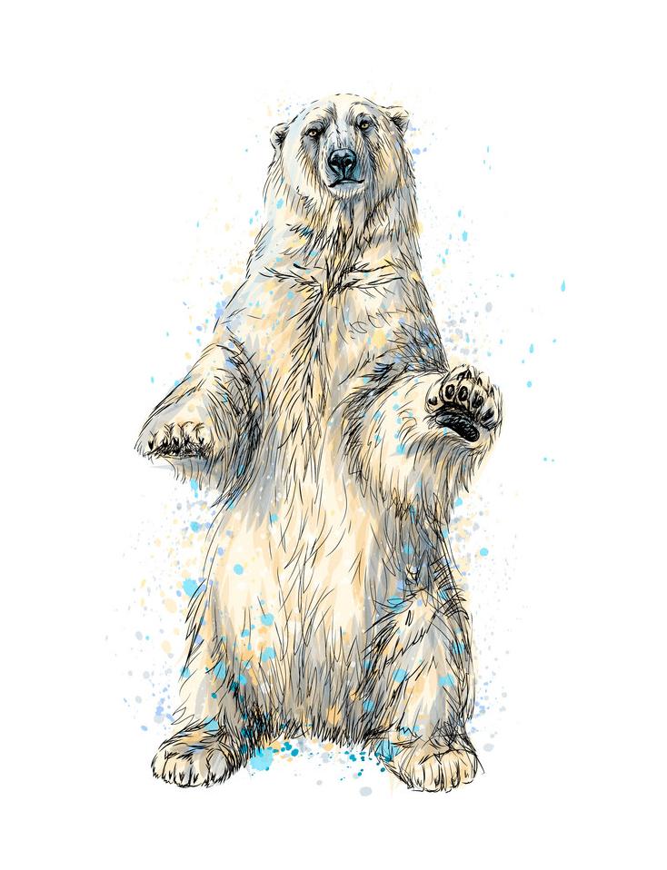 Polar Bear clipart free 3
