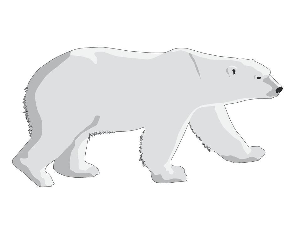 Polar Bear clipart free