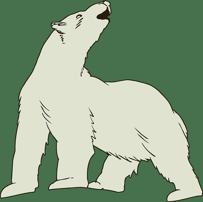 Polar Bear clipart transparent 9