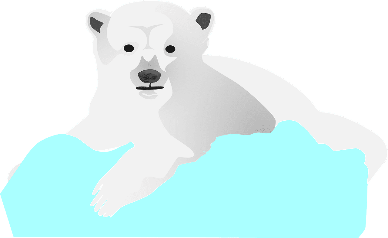 Polar Bear clipart transparent background 4