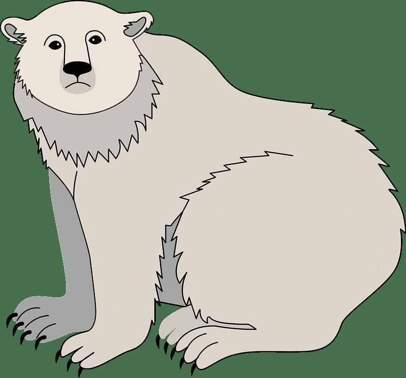 Polar Bear clipart transparent image