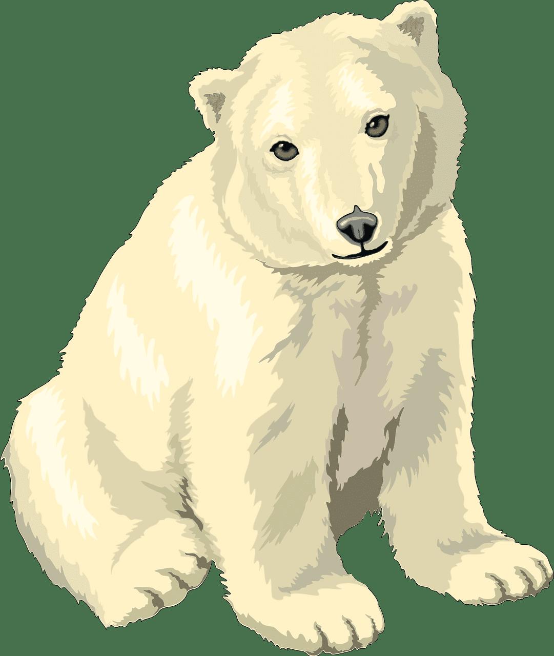Polar Bear clipart transparent picture