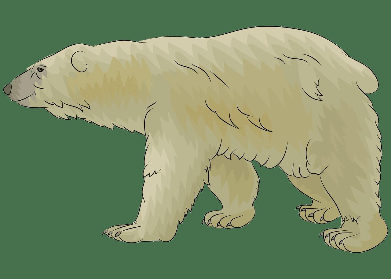 Polar Bear clipart transparent