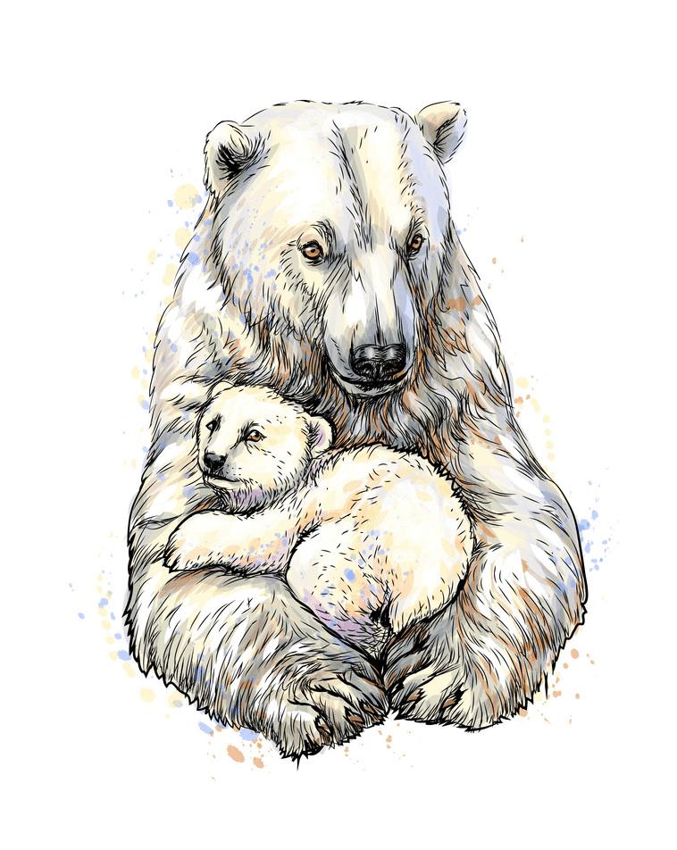 Polar Bears clipart image
